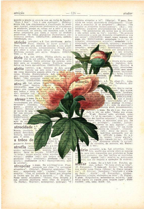 Vintage Peony Botanical Illustration Find Lots More Of The Best Vintage Book Illustrati Botanical Illustration Vintage Vintage Botanical Botanical Illustration