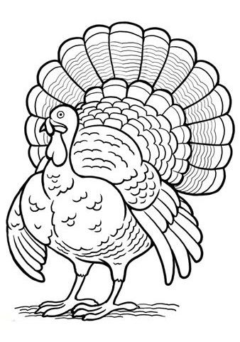 Turkey Coloring Pages For Toddlers Weve Selected 25 Of The Best That Will Help Your Little One Learn More About Their Favorite Bird