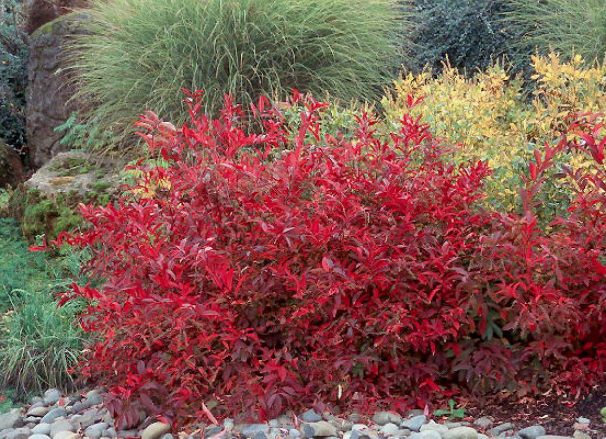 30 Ways To Color Your Yard This Fall Shade Shrubs Garden Shrubs