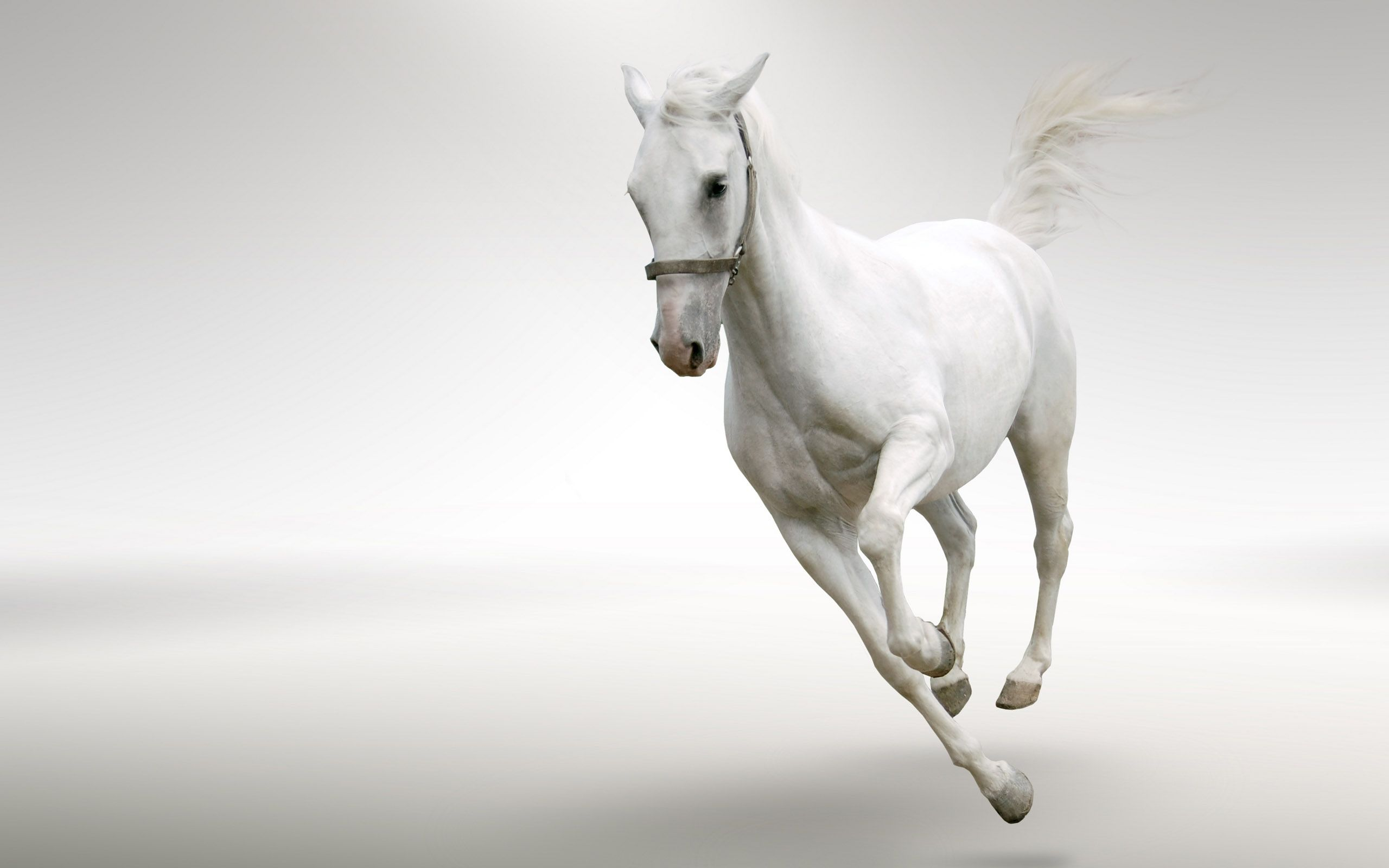Pin By Jo On Sensei Aamai White Horses Horse Wallpaper Horses