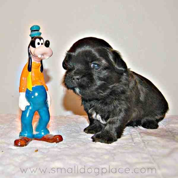Need A Great Dog Name Why Not Pick Your Favorite Disney Character See The