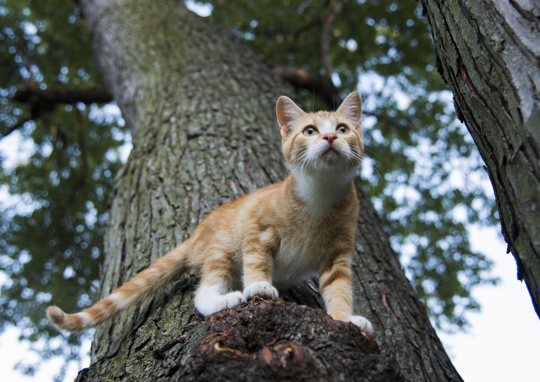 Can A Cat Get Caught On A Tree Limb Cat Behavior Cats Outdoor Cats