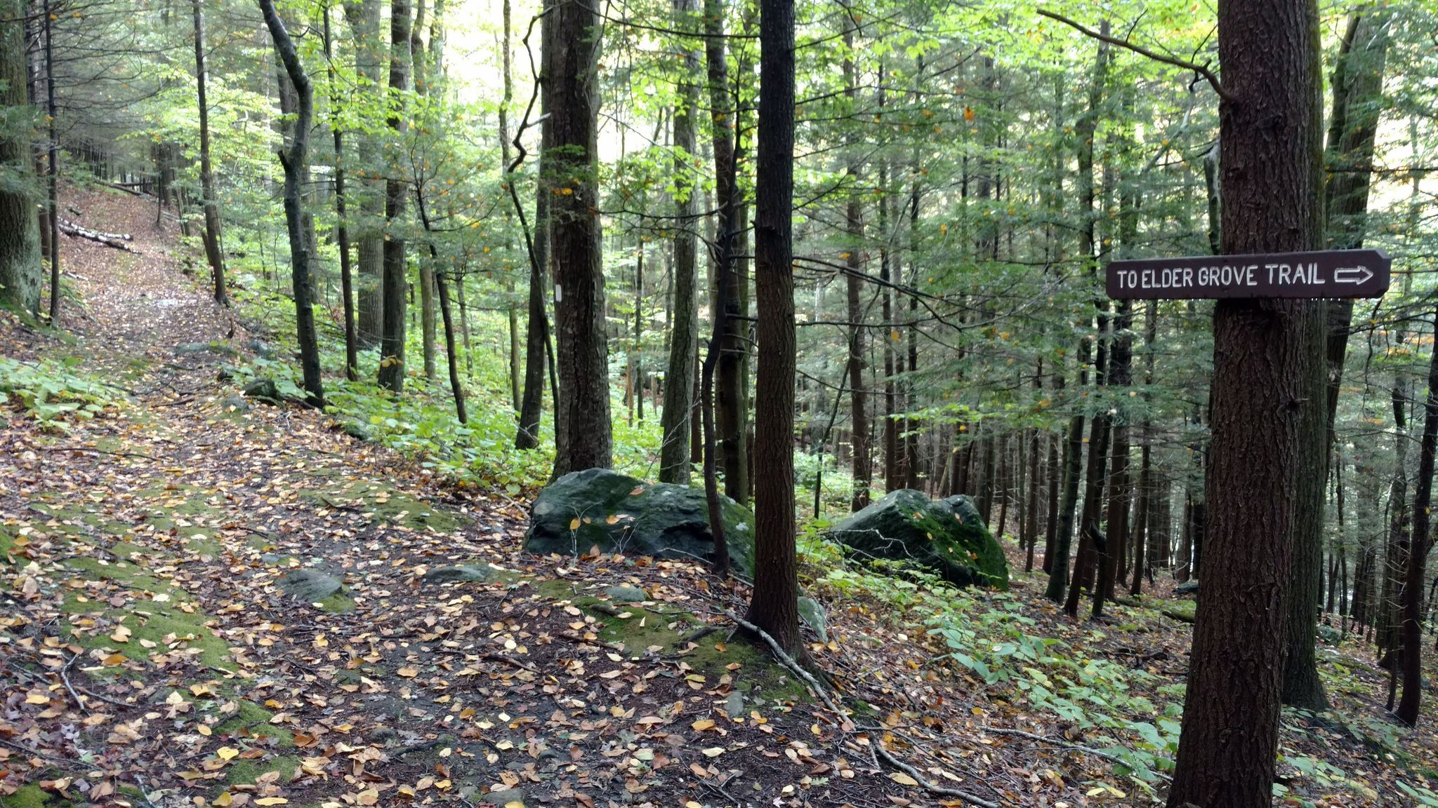The Trees At Massachusetts's Mohawk Trail State Forest Are Some Of ...