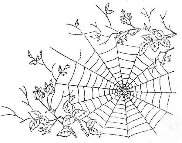 Spider Spider Web Between Tree Branch Coloring Page coloring