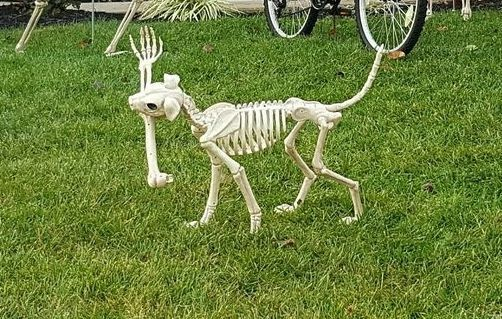 Ideas with a skeleton dog prop Outdoor Halloween diy decorations - outdoor halloween ideas