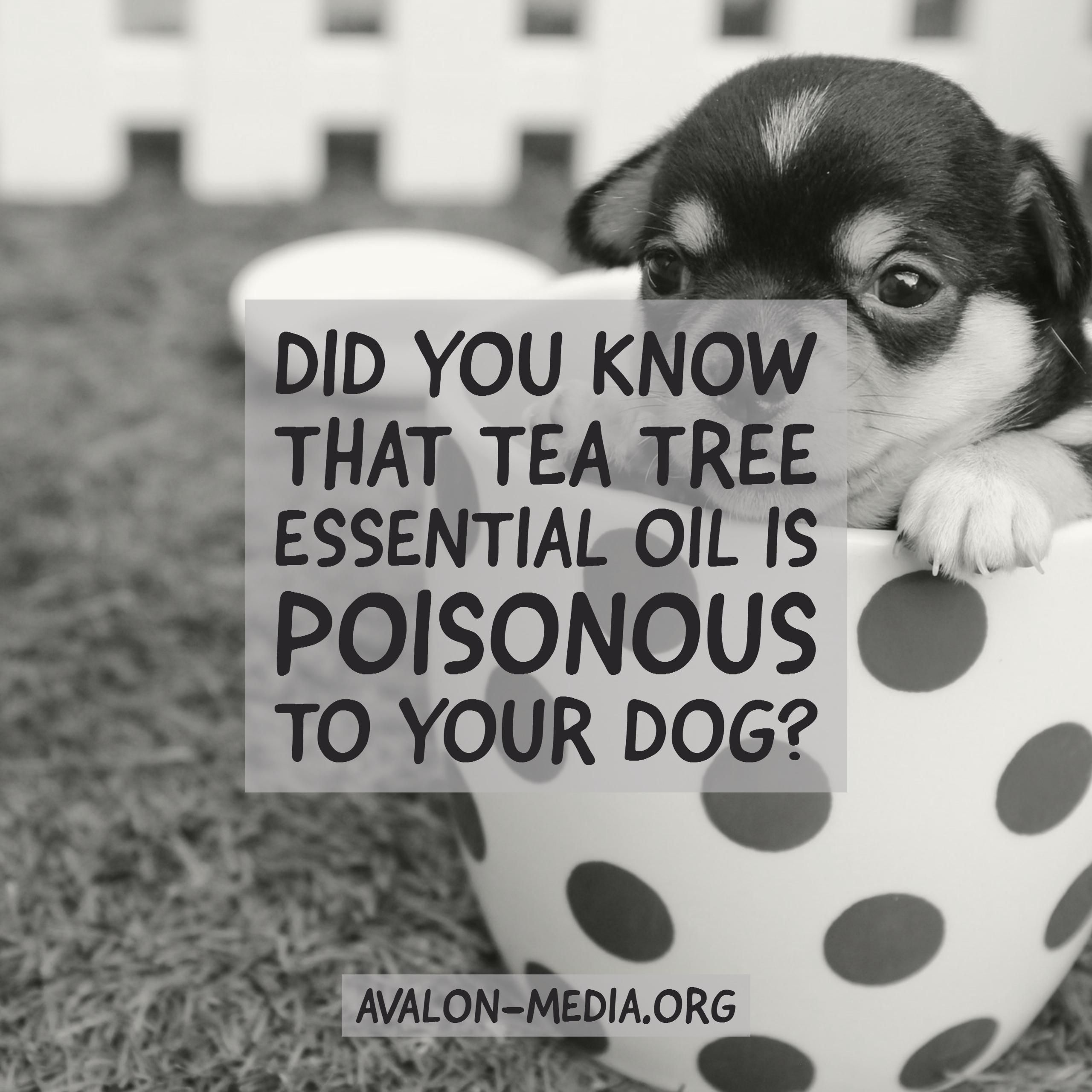 Mindful Pet Parenting Keep These Essential Oils Away From Your Pets Essential Oils Pet Parent Your Pet