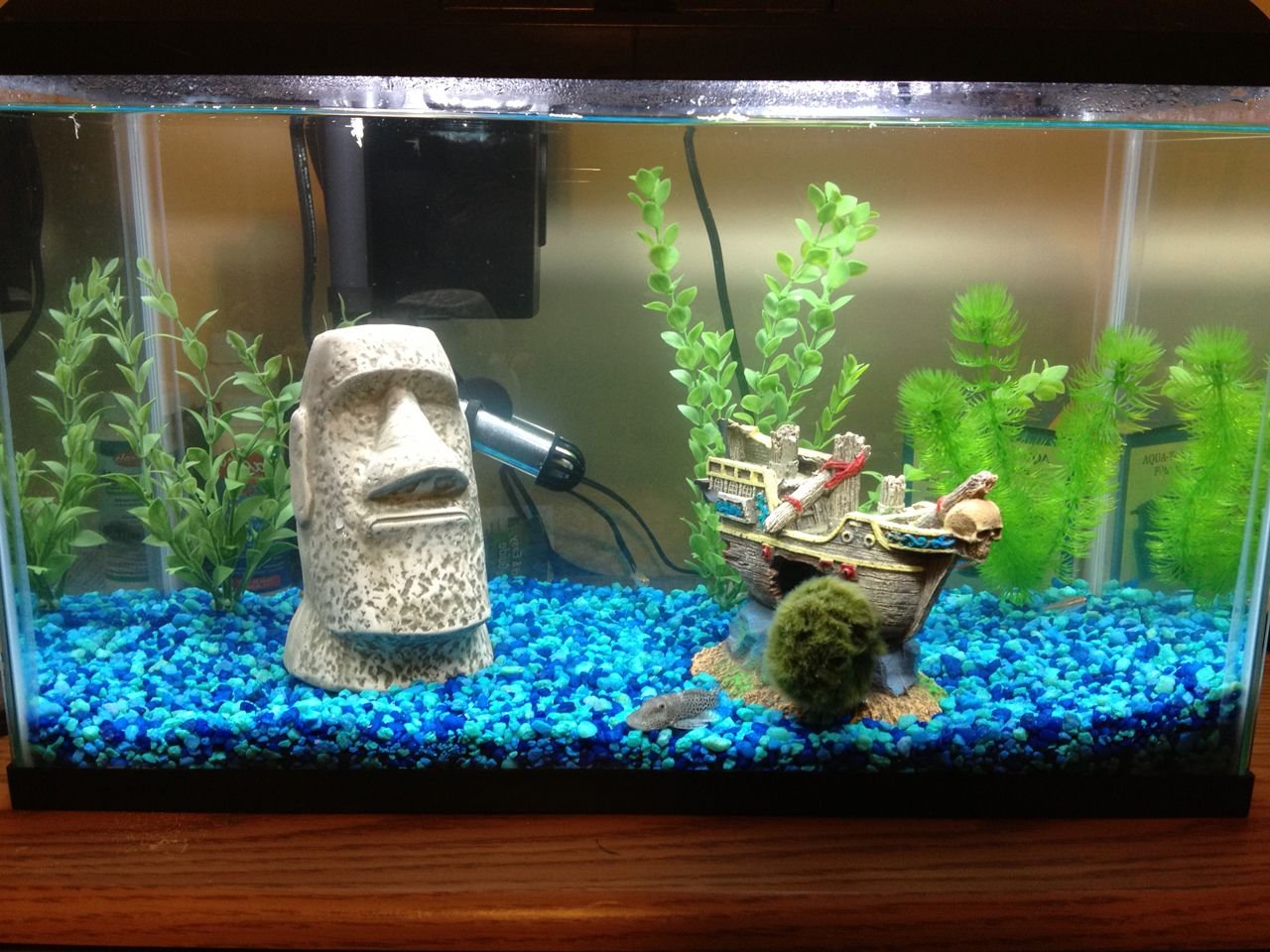 Fish Tank Decoration Ideas ~ http://www.lookmyhomes.com/amazing ...