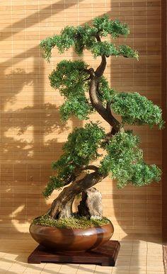 artificial bonsai cedar zokei