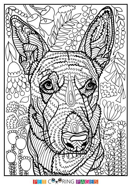 Australian Cattle Dog Coloring Page Lily Dog Coloring Page