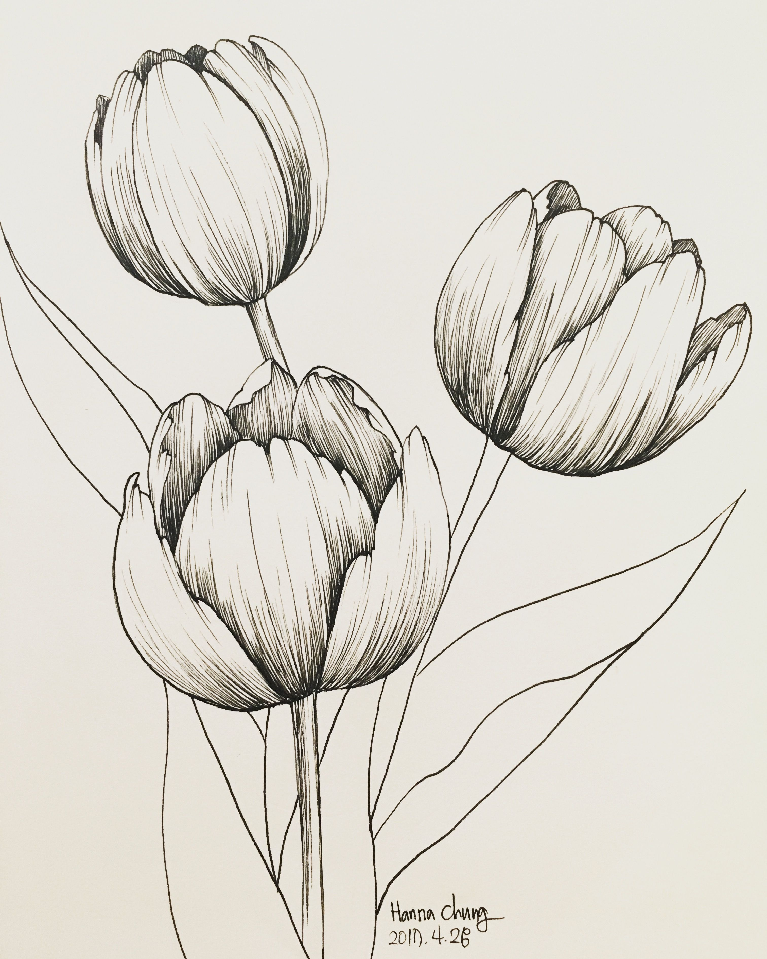 Hand Drawing By Hanna Chung Tulips Flower Sketch Images Flower Sketches Flower Painting Canvas