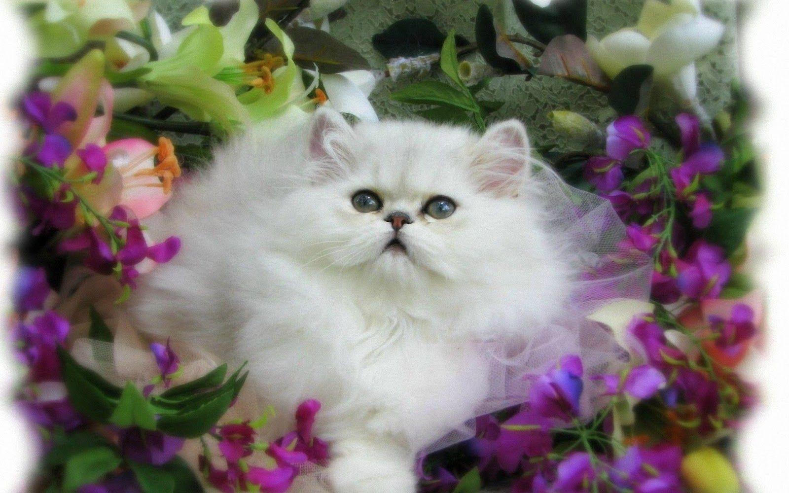 Download Wallpaper Kucing Imut Wallppapers Gallery Cat Flowers Animals Wallpaper