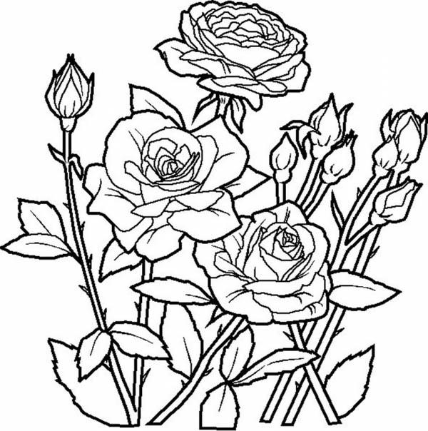 Elegant Roses For Beautiful Flower Bouquet Coloring Page Color Luna Rose Coloring Pages Flower Coloring Pages Garden Coloring Pages