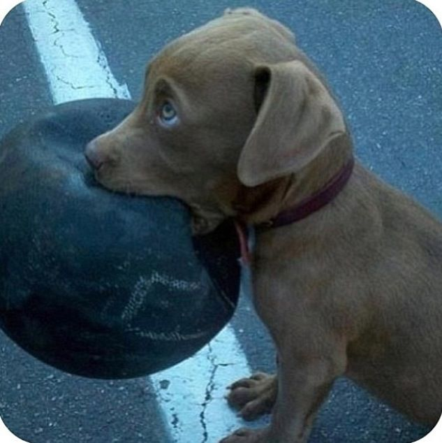 I think that ball is a little bit big for your mouth.