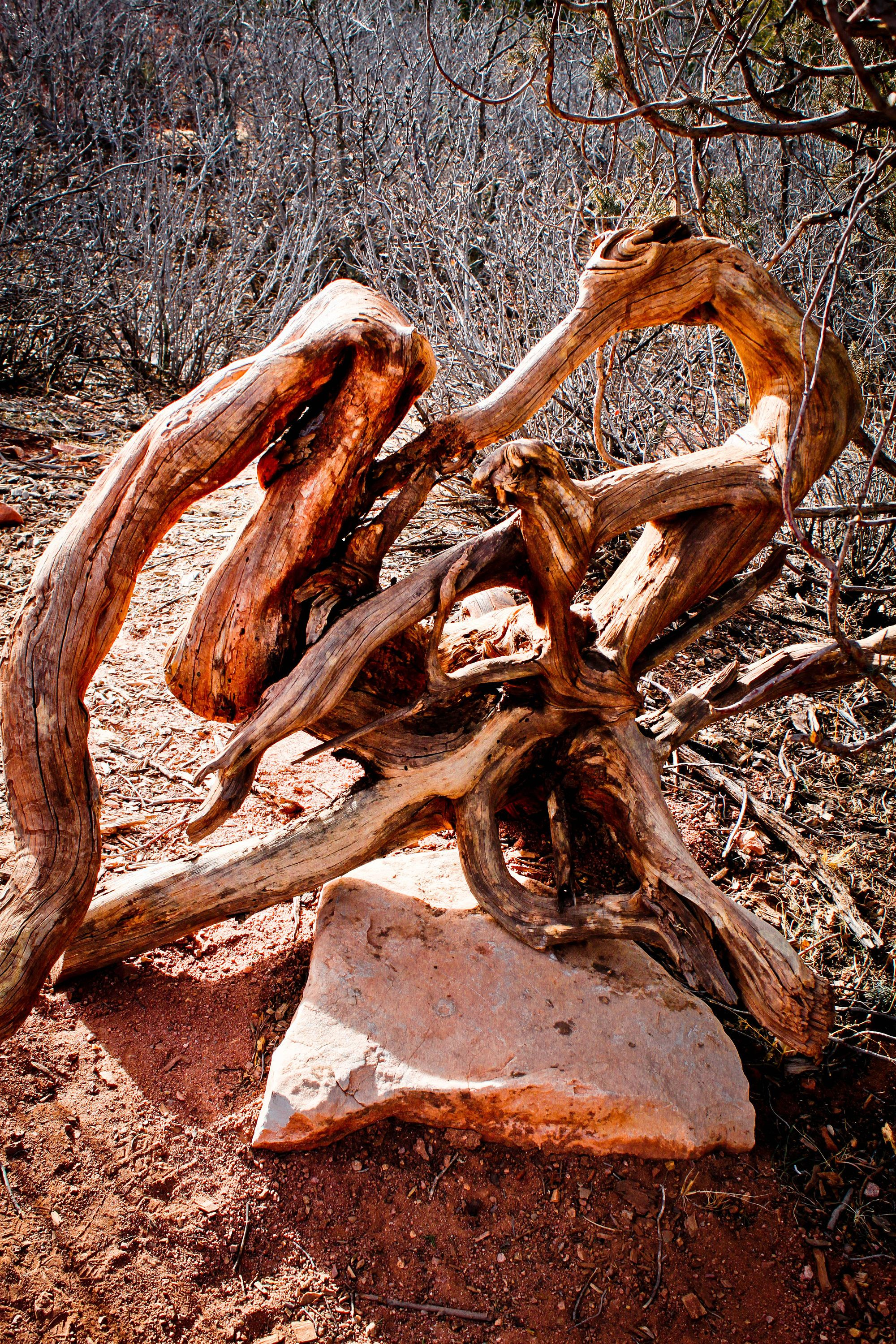 Drift wood, Garden of the Gods, Red, Mountains, Colorado, Fine Art, Photography by Studio50613 on Etsy