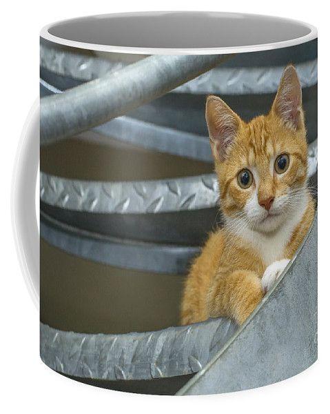 Cute Ginger Kitten Coffee Mug for sale by Patricia Hofmeester #gingerkitten