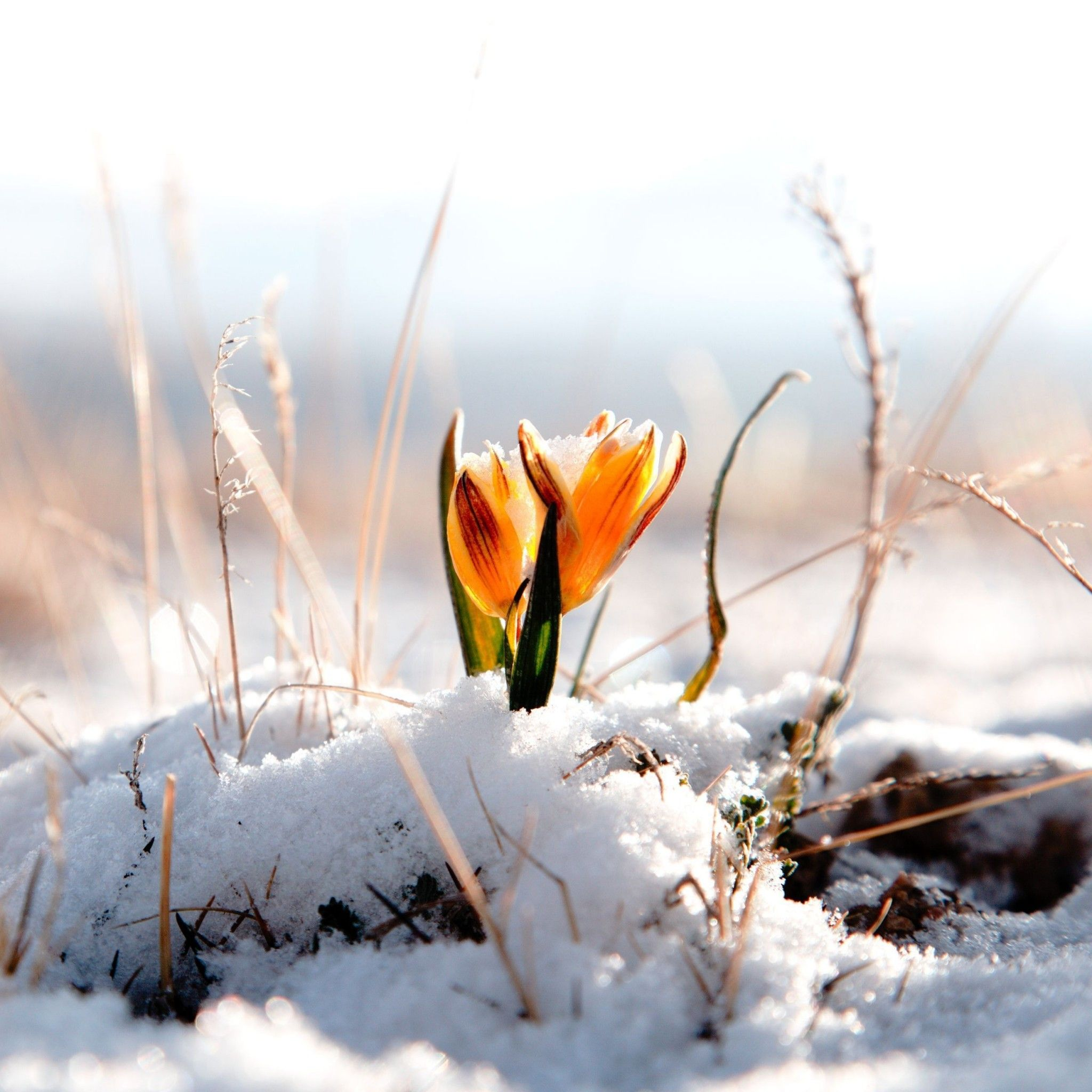 Orange Flower Snow   Tap to see more beautiful Winter snow flowers     Orange Flower Snow   Tap to see more beautiful Winter snow flowers  wallpapers     mobile9
