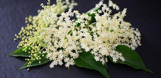 Holunderblüten, recepten met blier