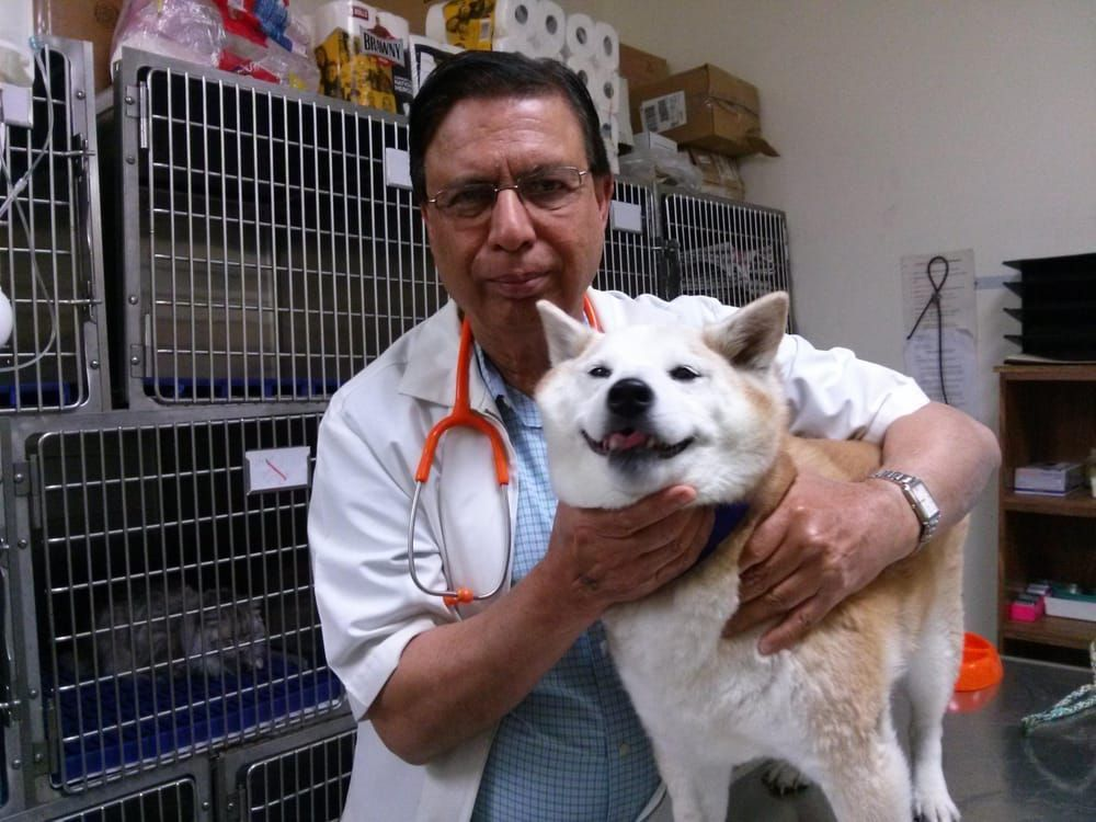 14++ Yorba linda animal hospital images