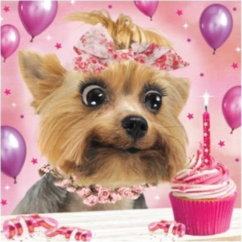 3 29 Gbp 3d Holographic Yorkshire Terrier Birthday Card Square Greeting Cards Ebay Home Garden Square Greeting Card Yorkshire Terrier Puppy Cupcakes