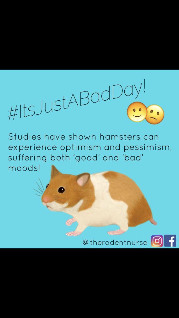 Hamsters Hamster Furry Friend Vet Tech