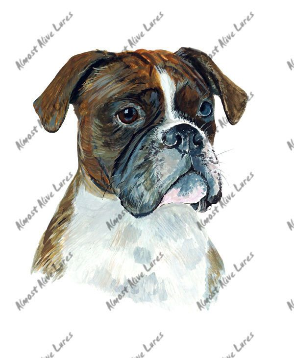 Details about BOXER BRINDLE DOG LOVER AUTO BOAT RV WINDOW