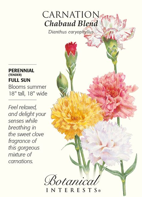 Chabaud Carnation Seeds 350 Mg Perennial In 2020 Carnation Flower Meaning Flower Meanings Carnations