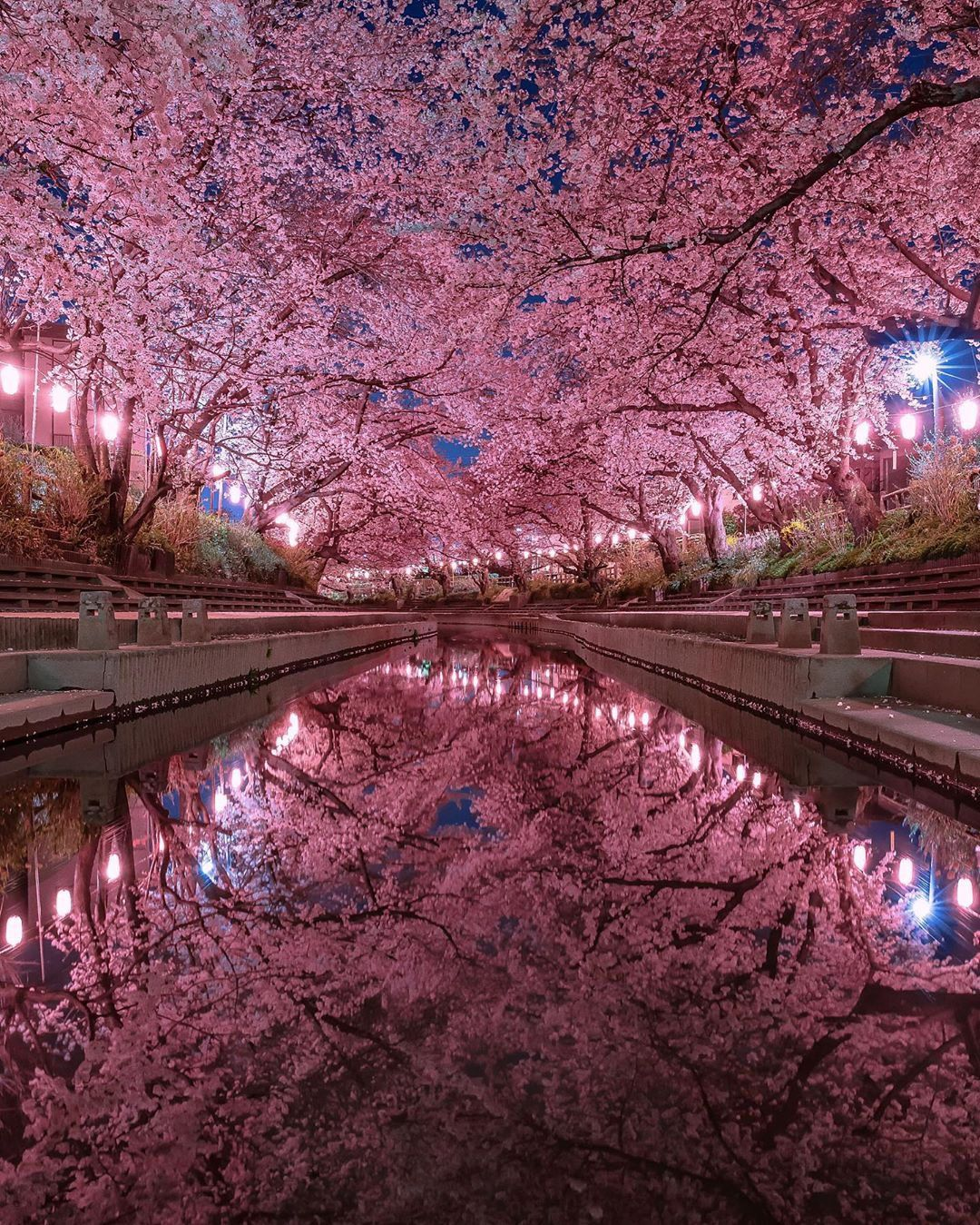 Japan On Twitter In 2021 Cherry Blossom Japan Japan Photography Nature Photography
