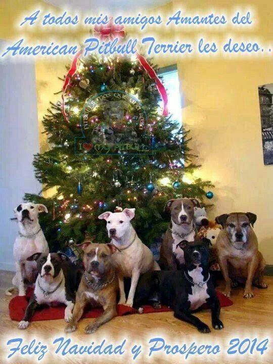 Pittie Christmas luv