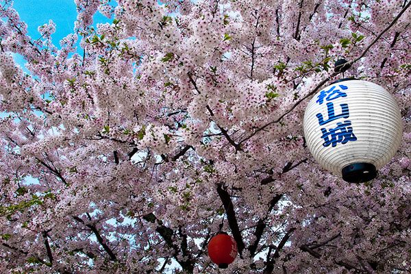 Bucket List Ideas 101 Things To Do Before You Die Bucket List Cherry Blossom Japan Bucket