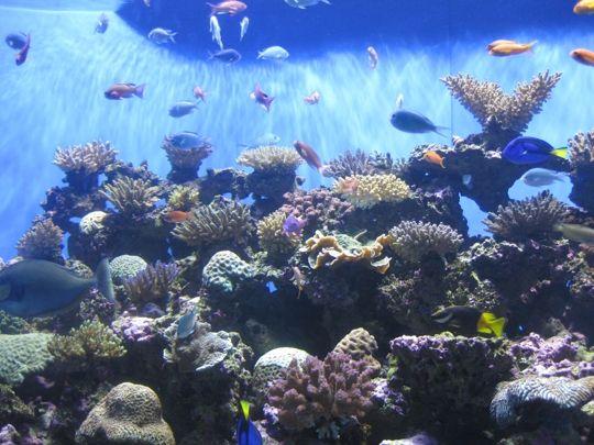 Birch Aquarium at Scripps Institution of Oceanography ...