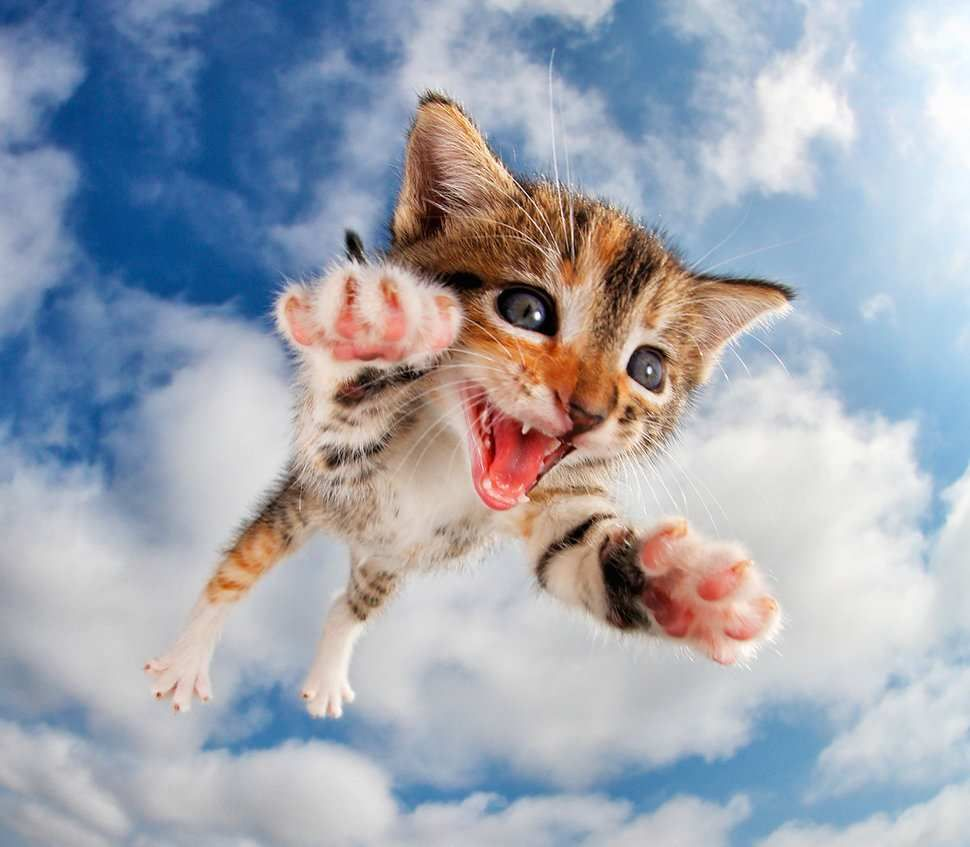 Adorable Cats And Kittens Flying Through The Air By Seth Casteel Kittens Cutest Cat Pics Cute Cats