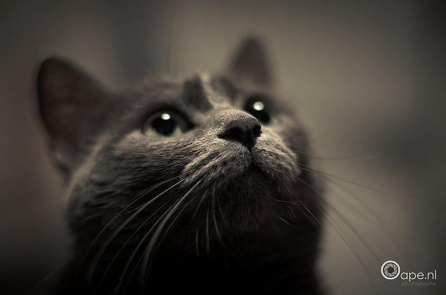 Curiosity by Oape, via Flickr