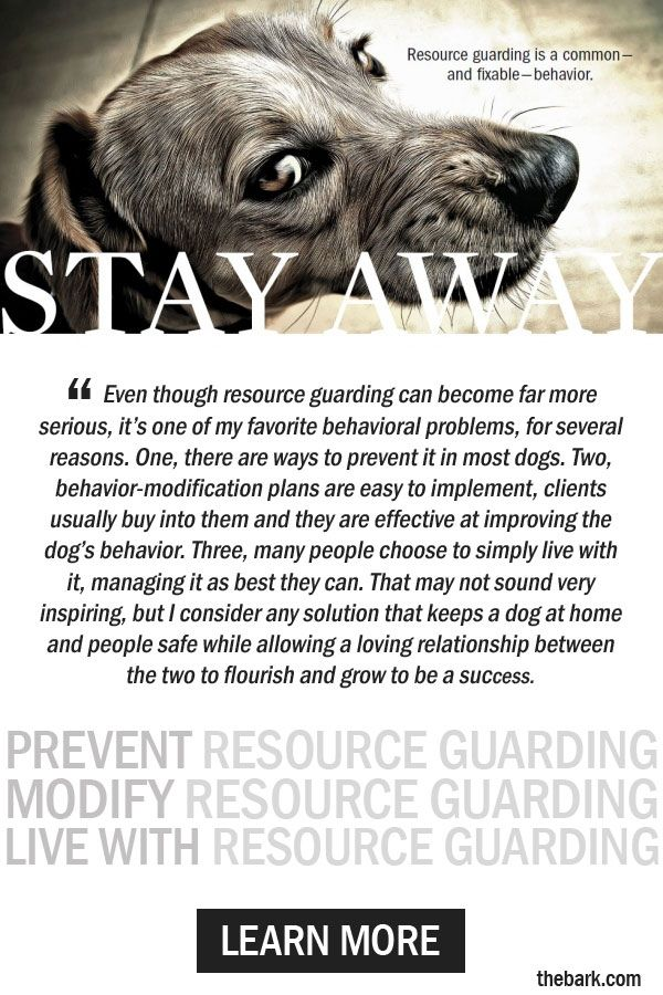 Resource Guarding In Dogs Solving This Troubling Problem Dog
