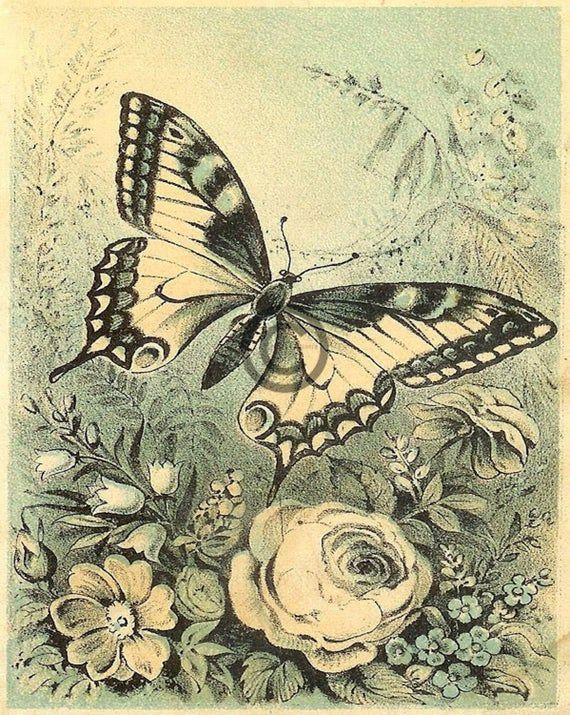 Vintage Butterfly Art Spring Vintage Digital Image