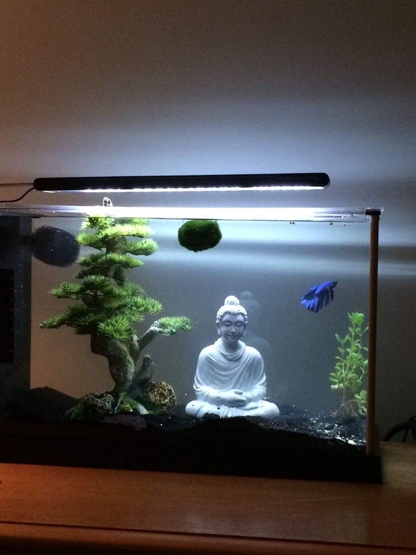 5 gallon fluval spec v with a betta petco and decor from for Decoration zen aquarium