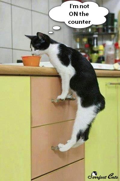 All cats like to play. Are you doing it right? Click to learn how to improve you technique.    Cat #cat #feline #funny