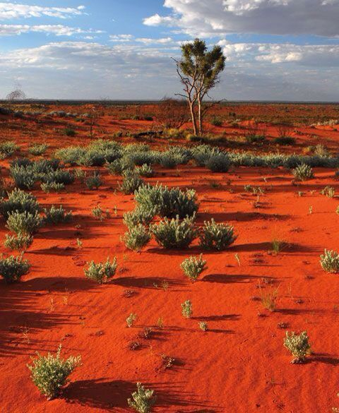 outback  australia  rare and remote area with lots of typical red sand