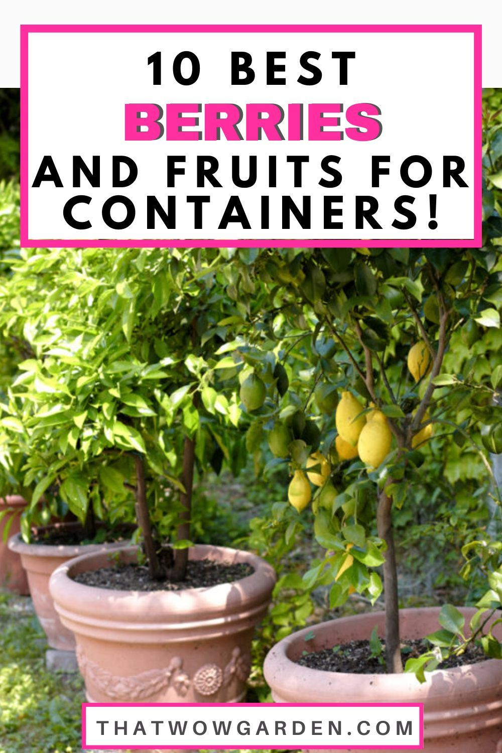 10 Best Fruits And Berries For Patio Containers Thatwowgarden Fruit Trees In Containers Strawberries In Containers Growing Fruit