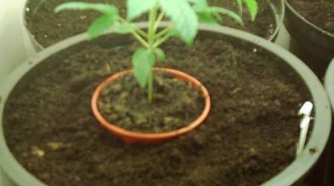 l 39 astuce pour rempoter une plante facilement m r plantes et fleurs plants garden et diy. Black Bedroom Furniture Sets. Home Design Ideas