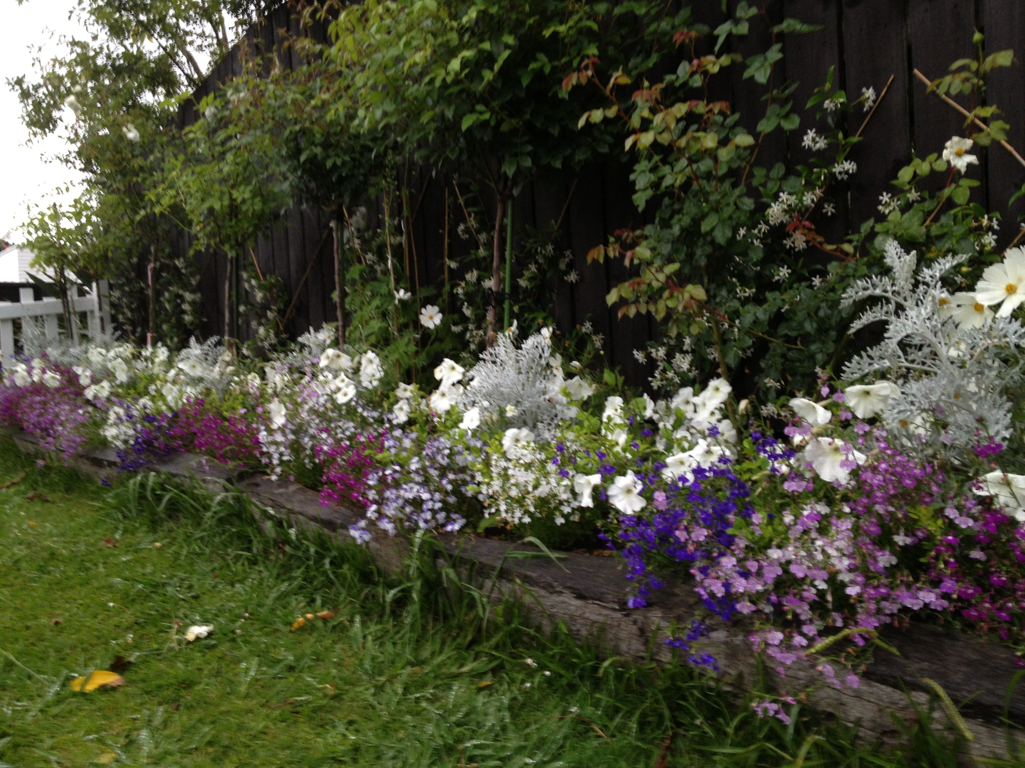 Mixed cascade lobelia garden border rose and hydrangea for Jardin a l anglaise