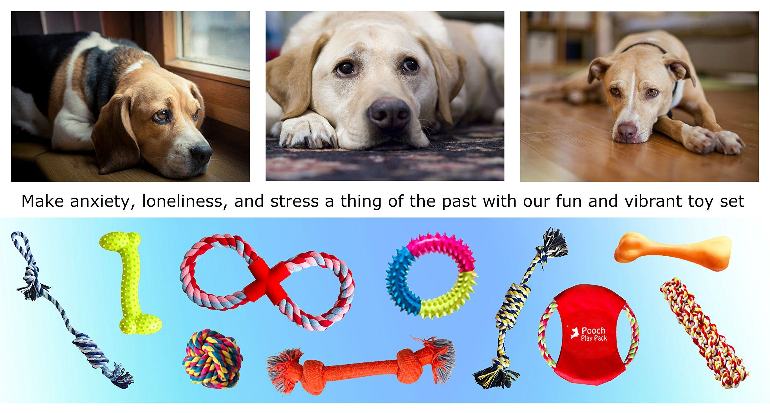 Make Pet Exercise More Fun picture
