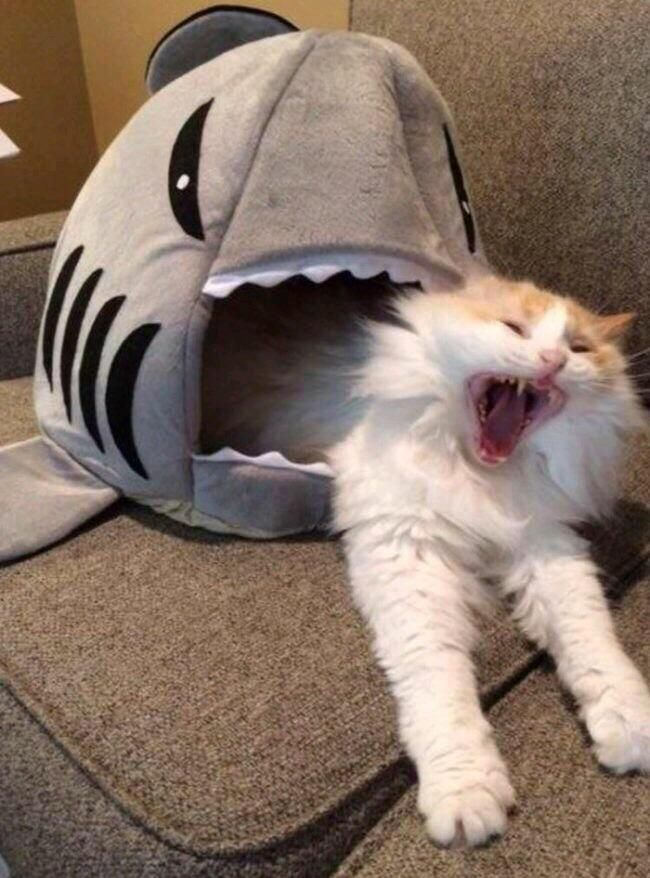Cat Viciously Eaten By Shark With Images Funny Cat Compilation