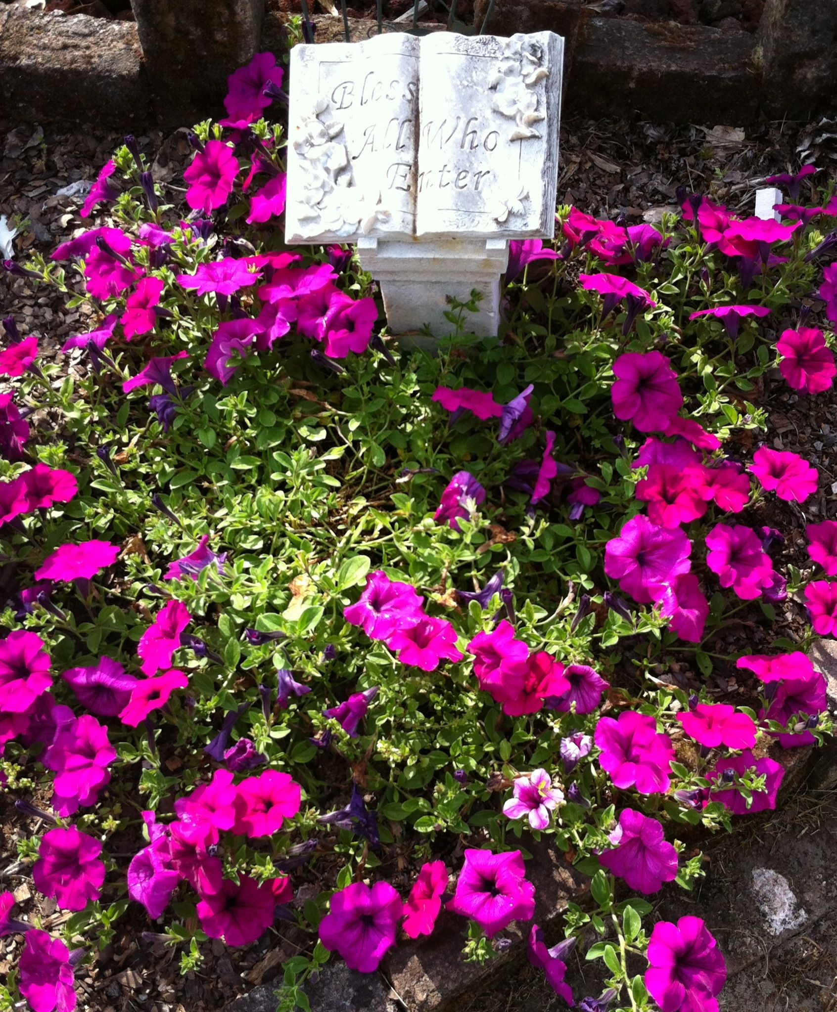 This Pink Petunia Returns Every Year Petunias Flower Garden Flowers