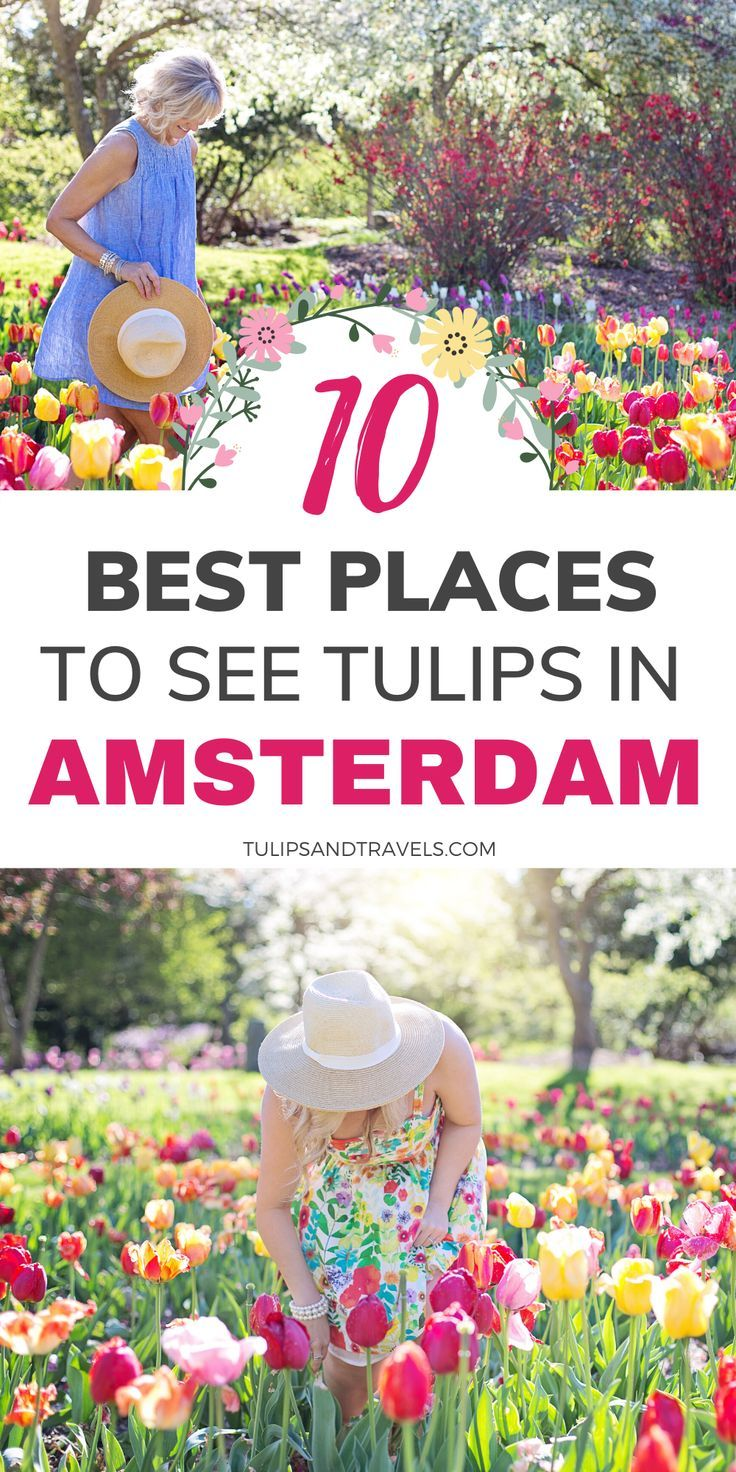 Spring 2020 10 Best Places To See Tulips In Amsterdam Amsterdam