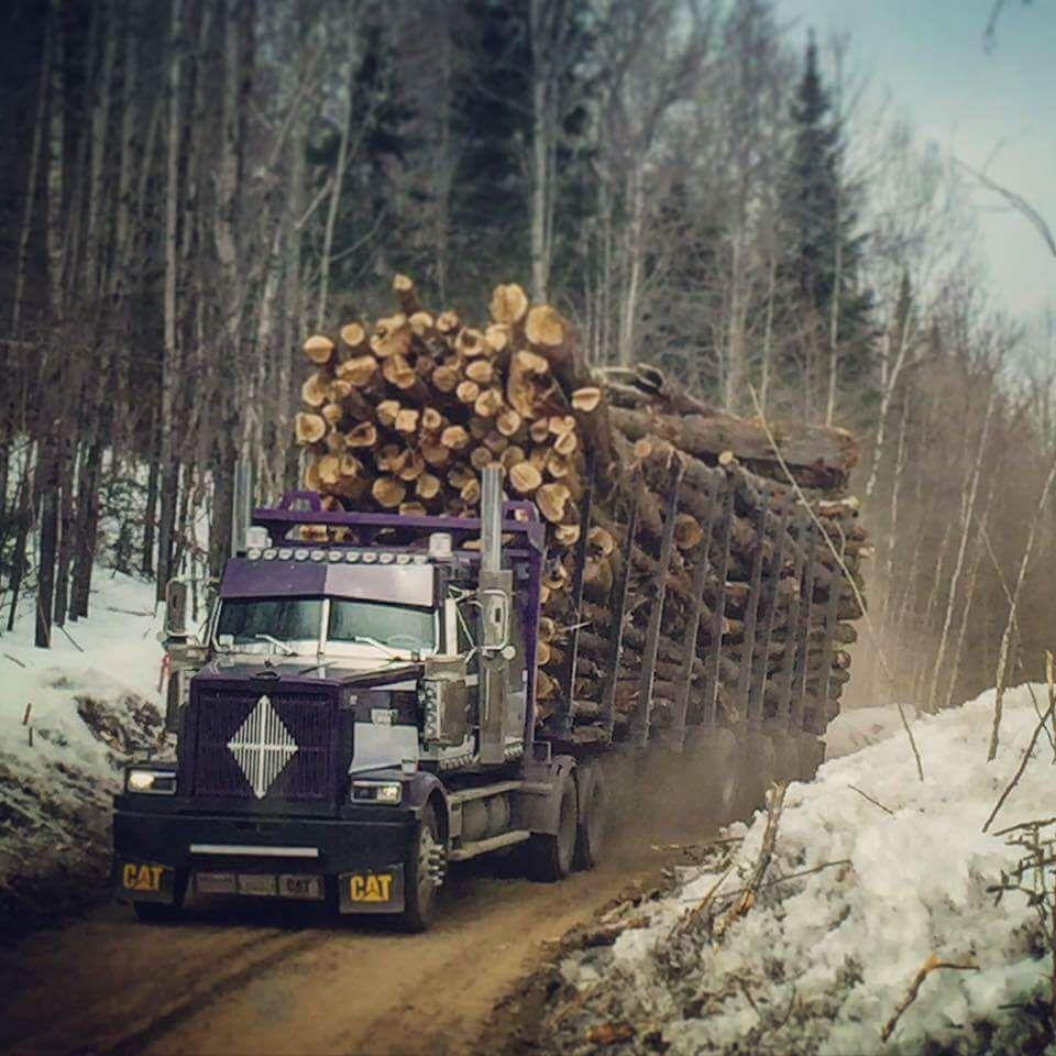 This Dude Has Wood Big Trucks Western Star Trucks Logging Equipment