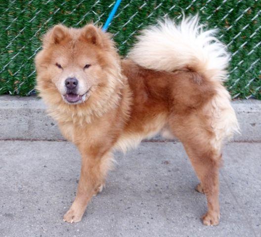 LION – A1100713 | Dogs, Dog adoption