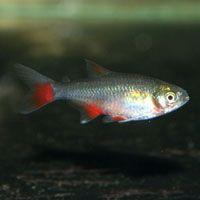 Freshwater Fish For Aquariums At That Fish Place Freshwater Fish Aquarium Fish For Sale Fish