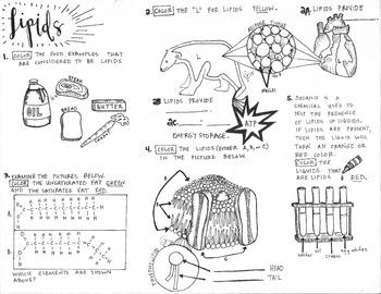 Biomolecules Lipids coloring sheet Teaching biology