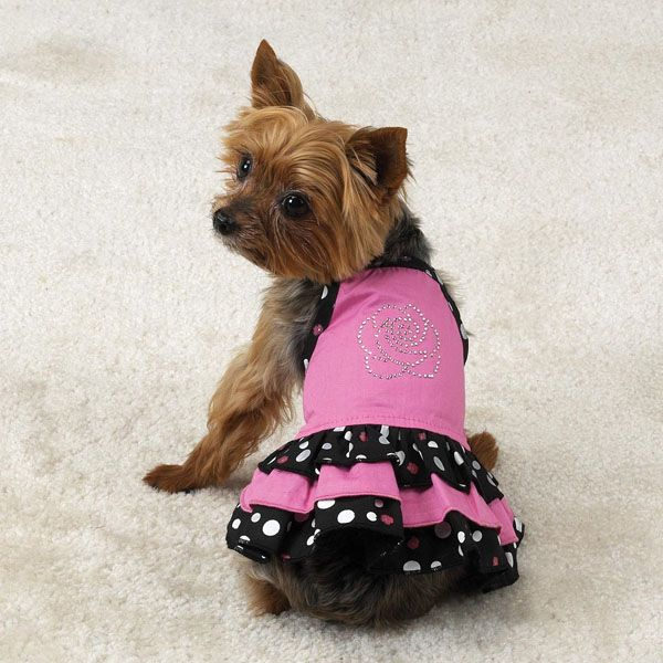 pets and their cute outfits | Dog clothes are very fashionable now ...