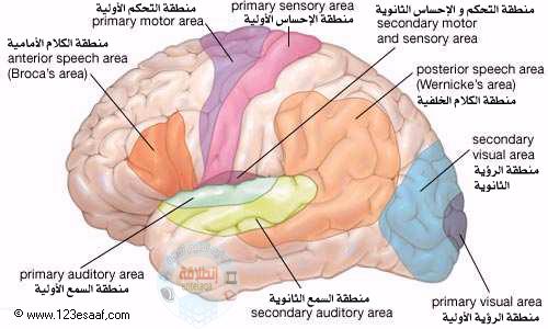pinterest explore brain diagram the brain and more ccuart Images